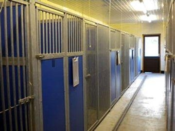 Purrfect Kennels