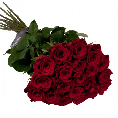 Long stemmed Red Ecuador Roses - to order for delivery on our website
