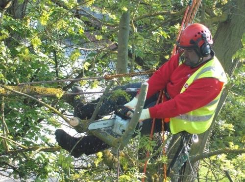 Tree Services Burton on Trent