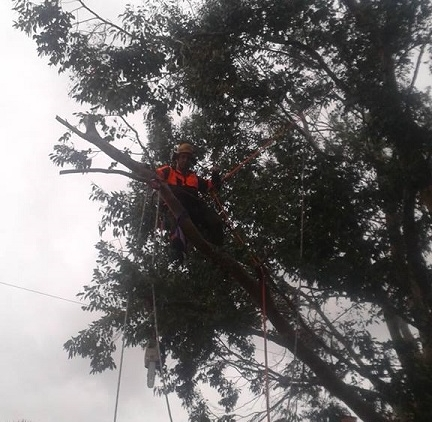 Tree Work at Height