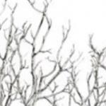 Twelve Silver Trees Jewellery