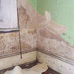 Damp and Condensation Control